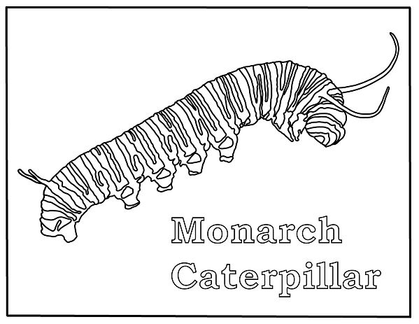Free Monarch Caterpillar Coloring Page.j