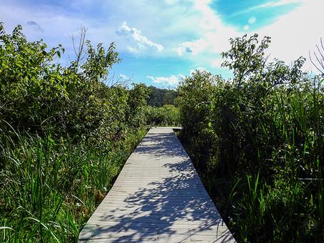 Calamus Swamp Preserve - Summer Visit