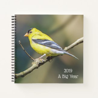 Male American Goldfinch Perched on Limb Journal for Birders