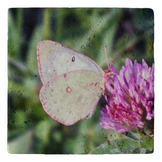 Common Sulfhur Butterfly Red Clover Stone Trivet