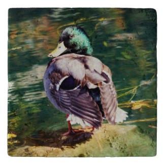 Mallard Duck Stone Trivet
