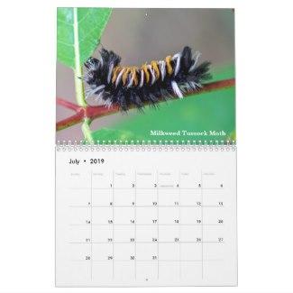 Milkweek Tussock Moth Caterpillar