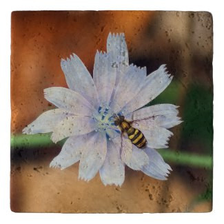 Hover Fly on Chicory Flower Stone Trivet