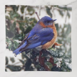 Eastern Bluebird Glass Trinket Tray