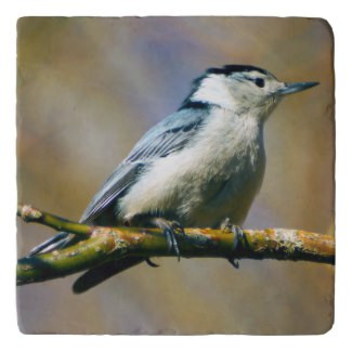 White Breasted Nuthatch Stone Trivet