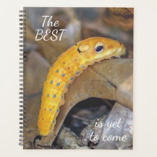 Spicebush Swallowtail Caterpillar Spiral Weekly/Monthly Planner
