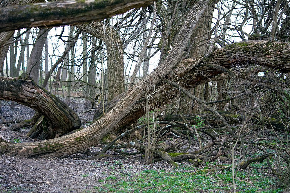 Calamus Swamp Preserve A Columbus Audubon Preserve Circleville Ohio