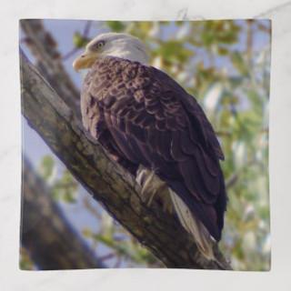 Bald Eagle Glass Trinket Tray