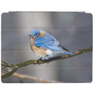 Eastern Bluebird on Limb iPad Smart Cover