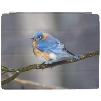 Eastern Bluebird on Limb iPad Smart Cover