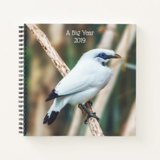 Bali Myna Bird Perched on Limb Journal for Bird Watching