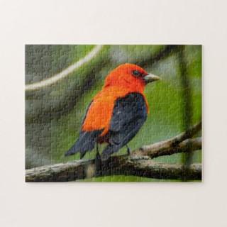 scarlet_tanager_bird_puzzle-rf9bde77e26b