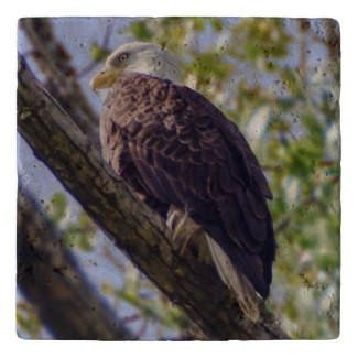Bald Eagle Stone Trivet