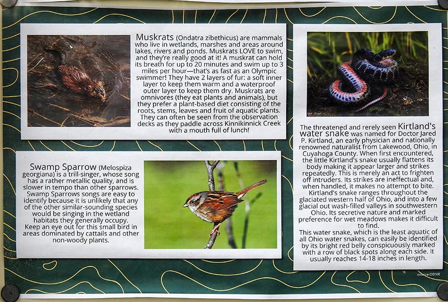 Informative Map at Kinninkinnick Fen Nature Preserve regarding Muskrats, Swamp Sparrows and Kirkland's Water Snake in Ohio