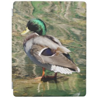 Mallard Duck iPad Smart Cover