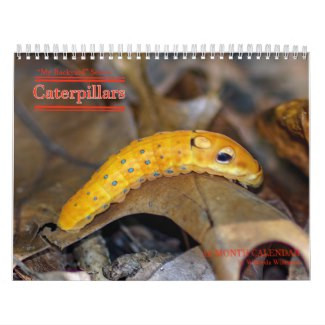 Ohio Caterpillars Callendar