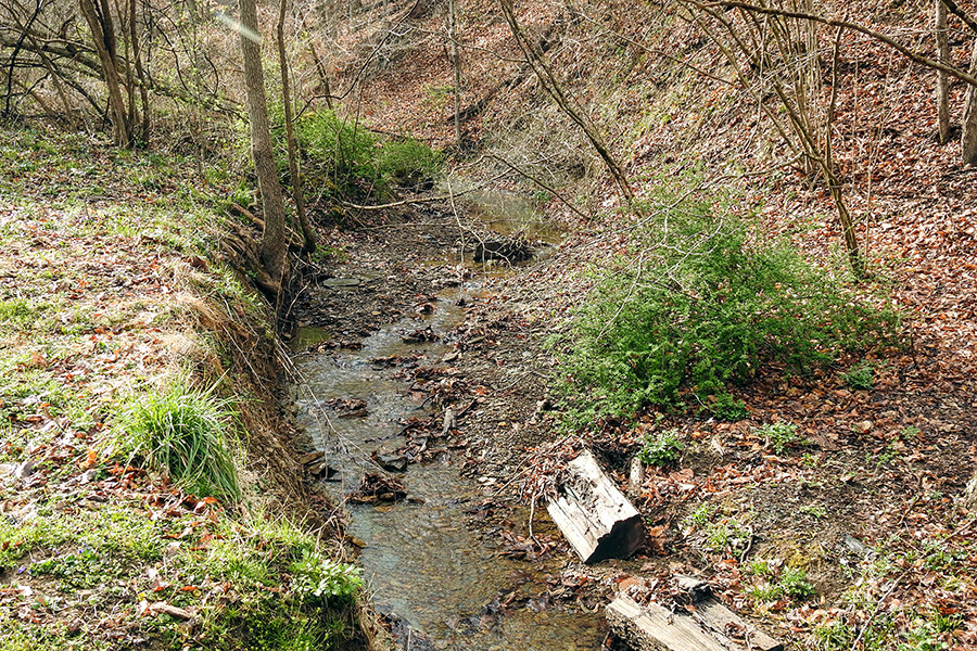 Creek at Trailer RV Park at Tar Hollow State Park Campground
