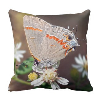 Dusky Blue Hairstreak Butterfly Throw Pillow