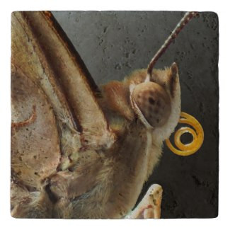 Empress Leilia Butterfly Stone Trivet