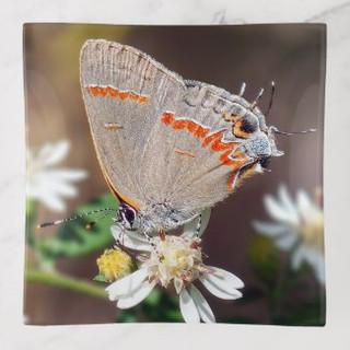 dusky_blue_hairstreak_butterfly_trinket_