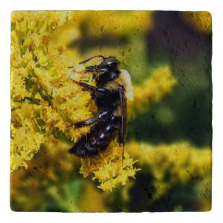 Mining Bee on Goldenrod Stone Trivet