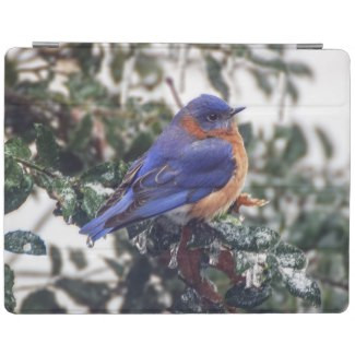 Eastern Bluebird on Holly iPad Smart Cover