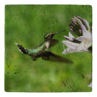 Ruby Throated Hummingbird Stone Trivet