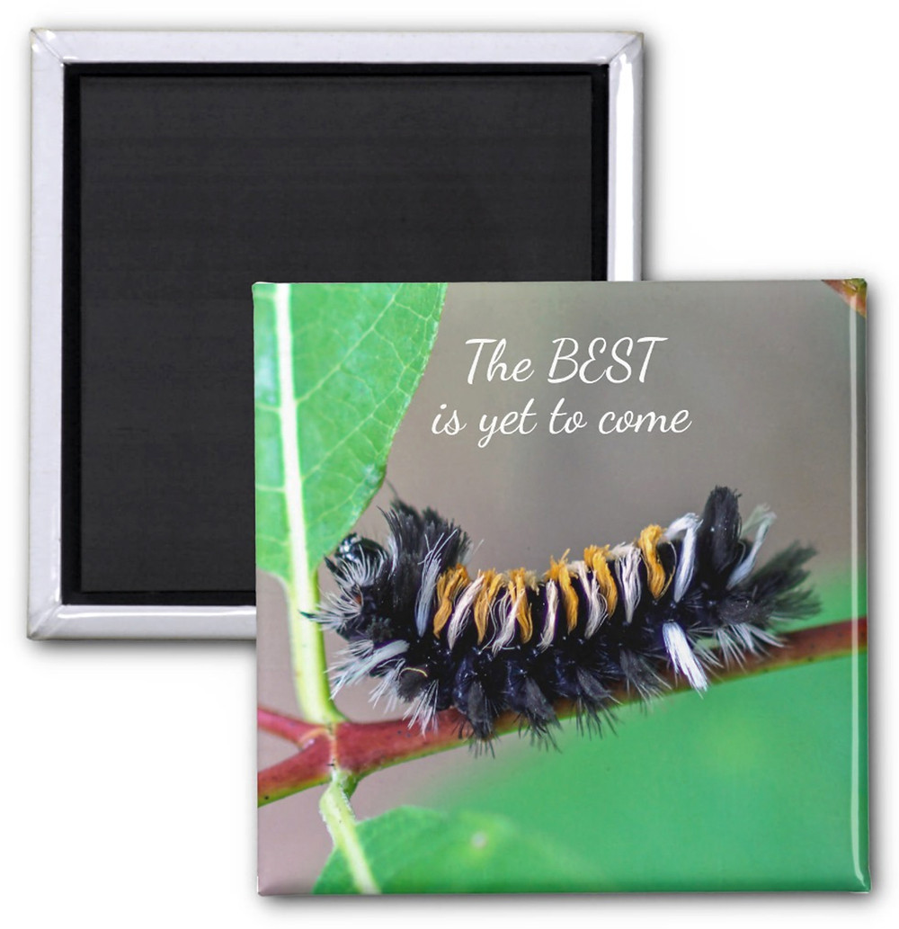 The Best is Yet to Come Milkweed Tussock Moth Caterpillar Magnet