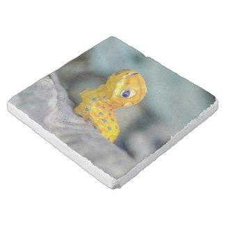 Spicebush Swallowtail Caterpillar Stone Coaster