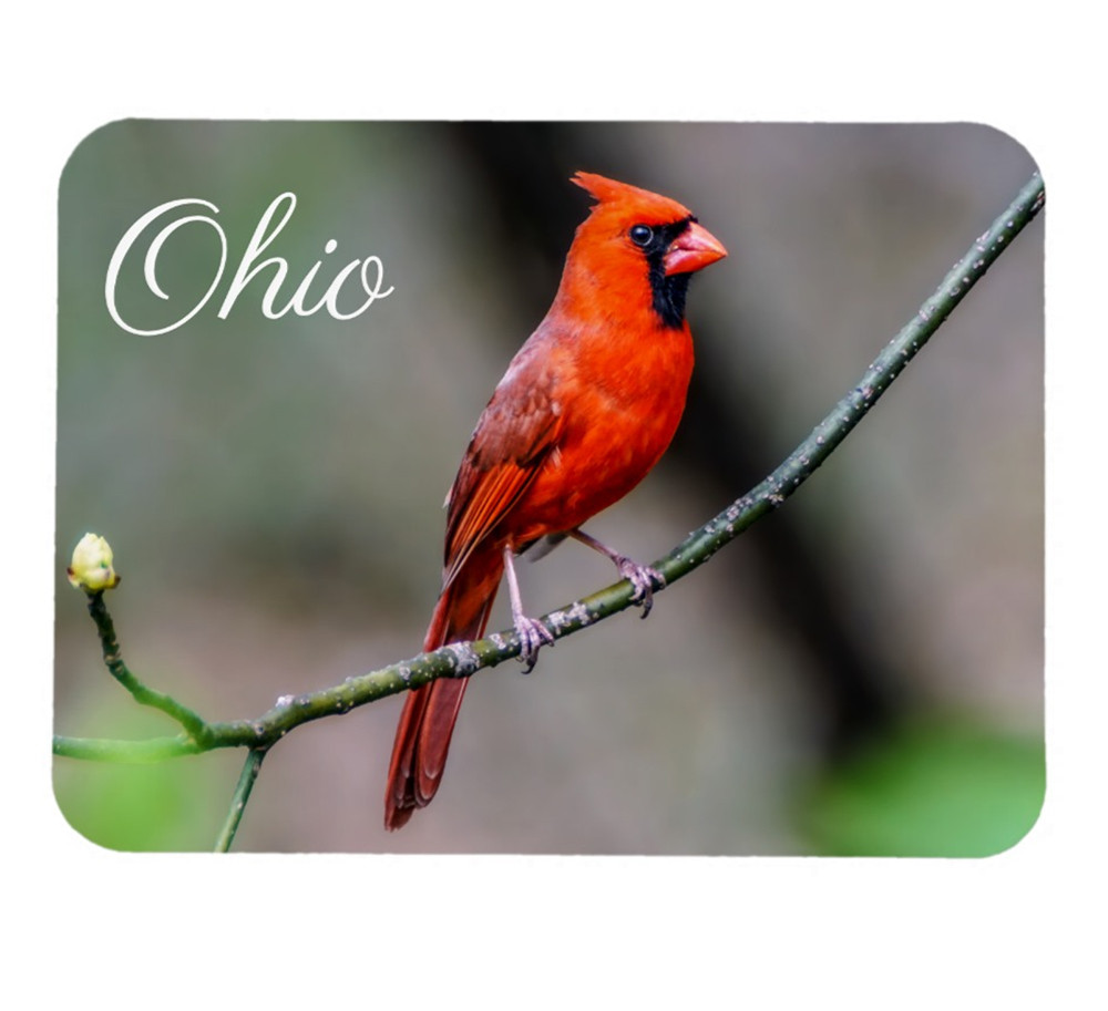 Ohio Northern Cardinal Collectible Magnet