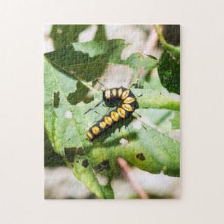 paddle_caterpillar_puzzle-r588279103db54