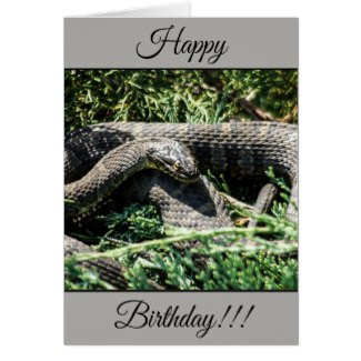 Personalized Happy Birthday Snake Card