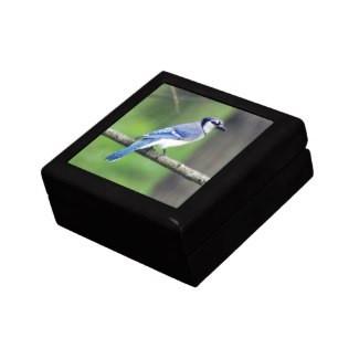 Blue Jay Keepsake Gift Box
