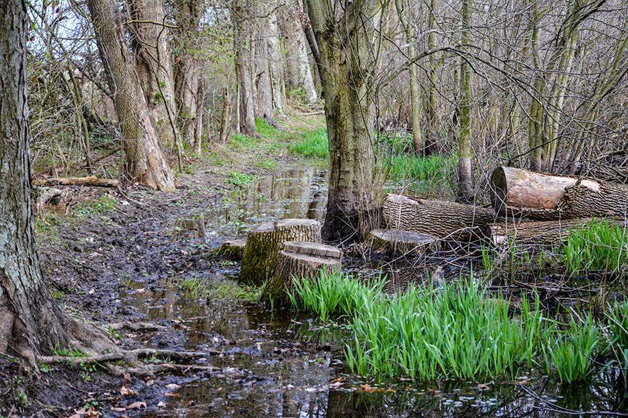 Muddy Trail at Calamus Swamp Nature Preserve Calamus Swamp Preserve A Columbus Audubon Preserve Circleville Ohio