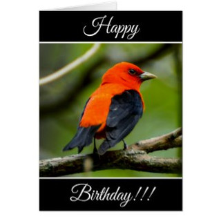 Personalized Happy Birthday Scarlet Tanager Card