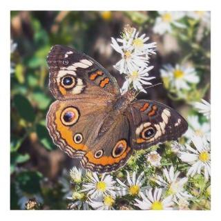 Buckeye Butterfly Wall Panel