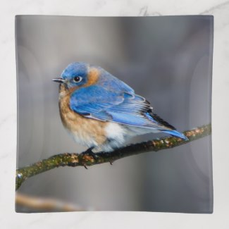 Eastern Bluebird on Branch Glass Trinket Tray