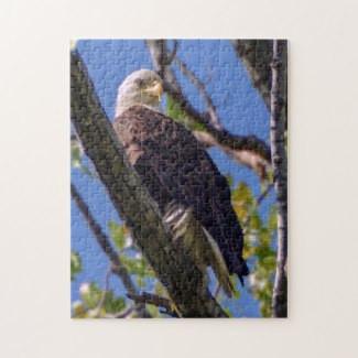 bald_eagle_puzzle-r93eba43322f04175b85db