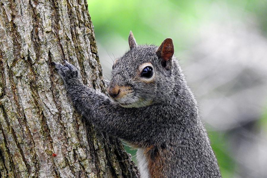 Squirrel at Caesar Creek Gorge in Waynesville Ohio