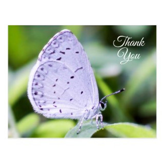 Thank You Spring Azure Butterfly Postcard