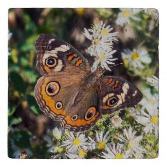 Buckeye Butterfly Stone Trivet
