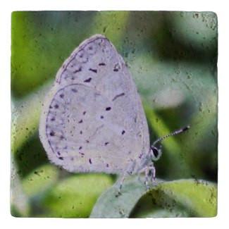 Spring Azure Butterfly Stone Trivet