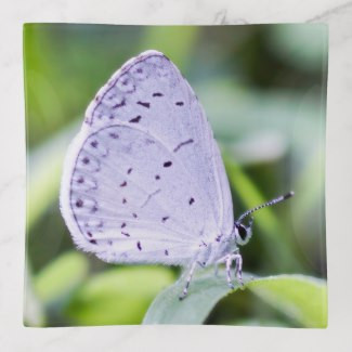 spring_azure_butterfly_trinket_tray-rc37