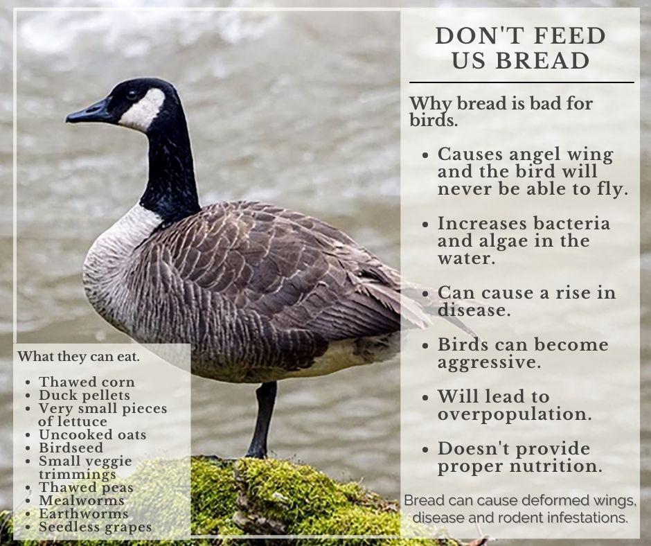 Don't Feed Bread to Birds