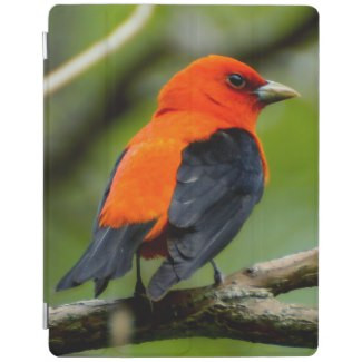 Scarlet Tanager iPad Smart Cover