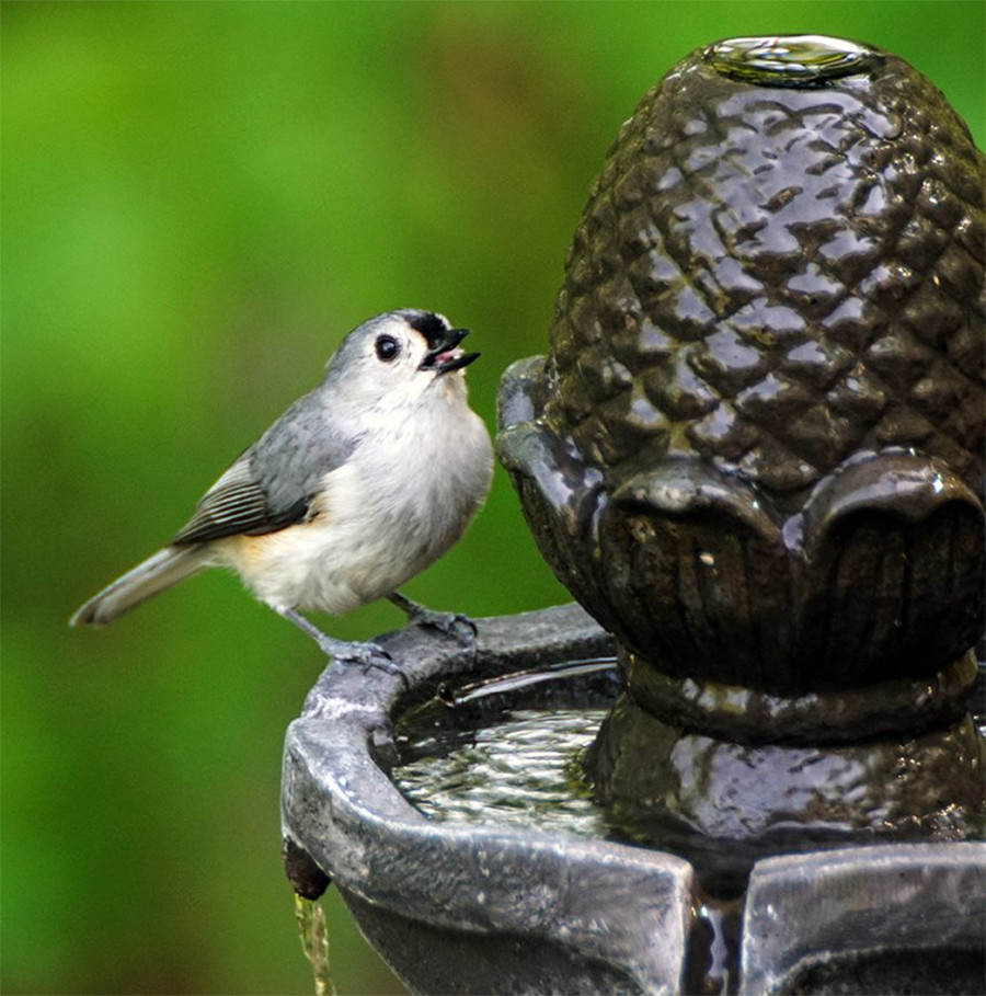 Tufted Titmouse in Tiered Water Fountain Water Features for Ohio Birds