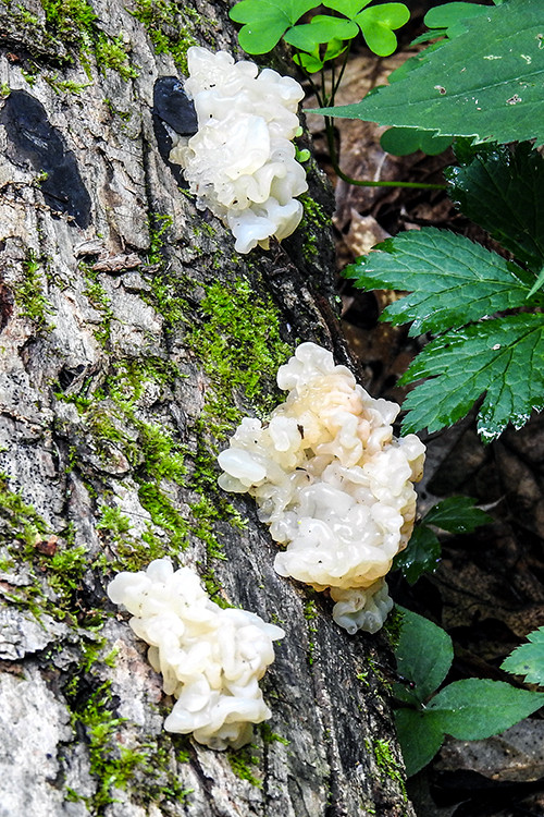 Fungus on a tree at Caesar Creek State Park Campground in Wilmington Ohio