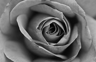 Monochromatic Black and White Rose