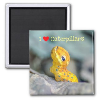 I Love Caterpillars Spicebush Swallowtail Caterpillar Magnet