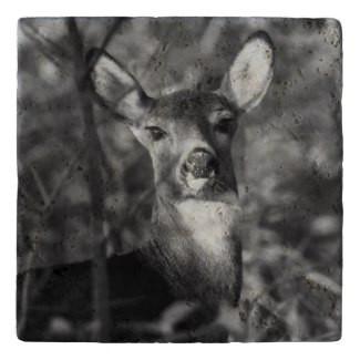 White Tailed Deer Stone Trivet
